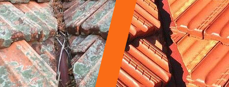 Why do I have moss and mould on my Terracotta roof? – Mark – Norman Park